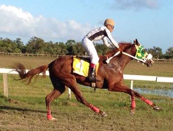 https://horseracingbelize.com/American Purse
