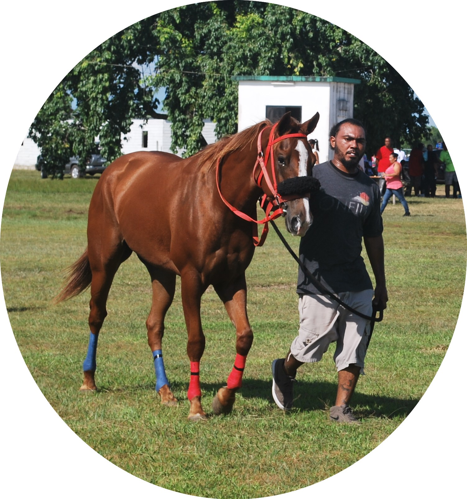 https://horseracingbelize.com/Rose