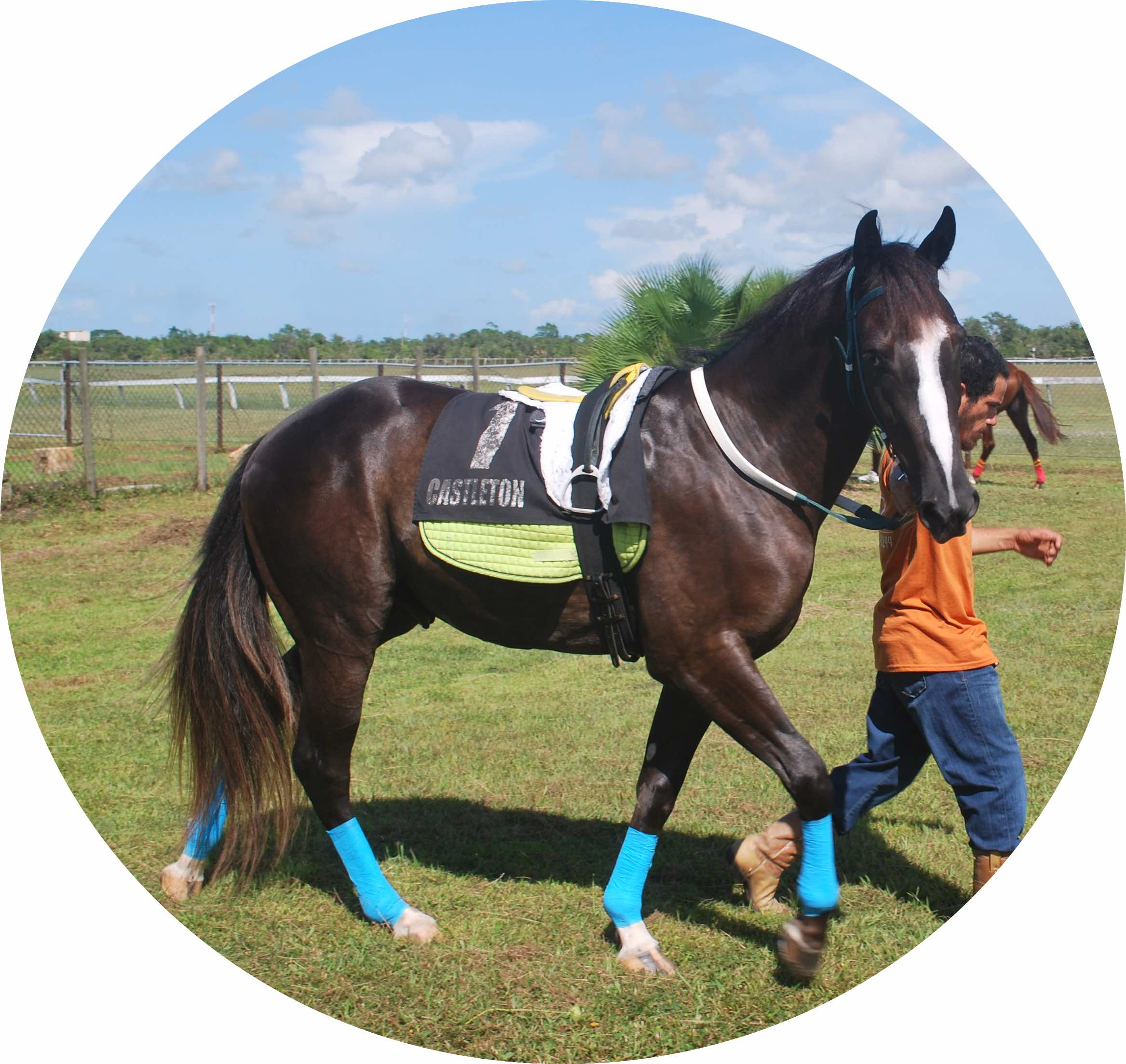 https://horseracingbelize.com/Storm Cloud