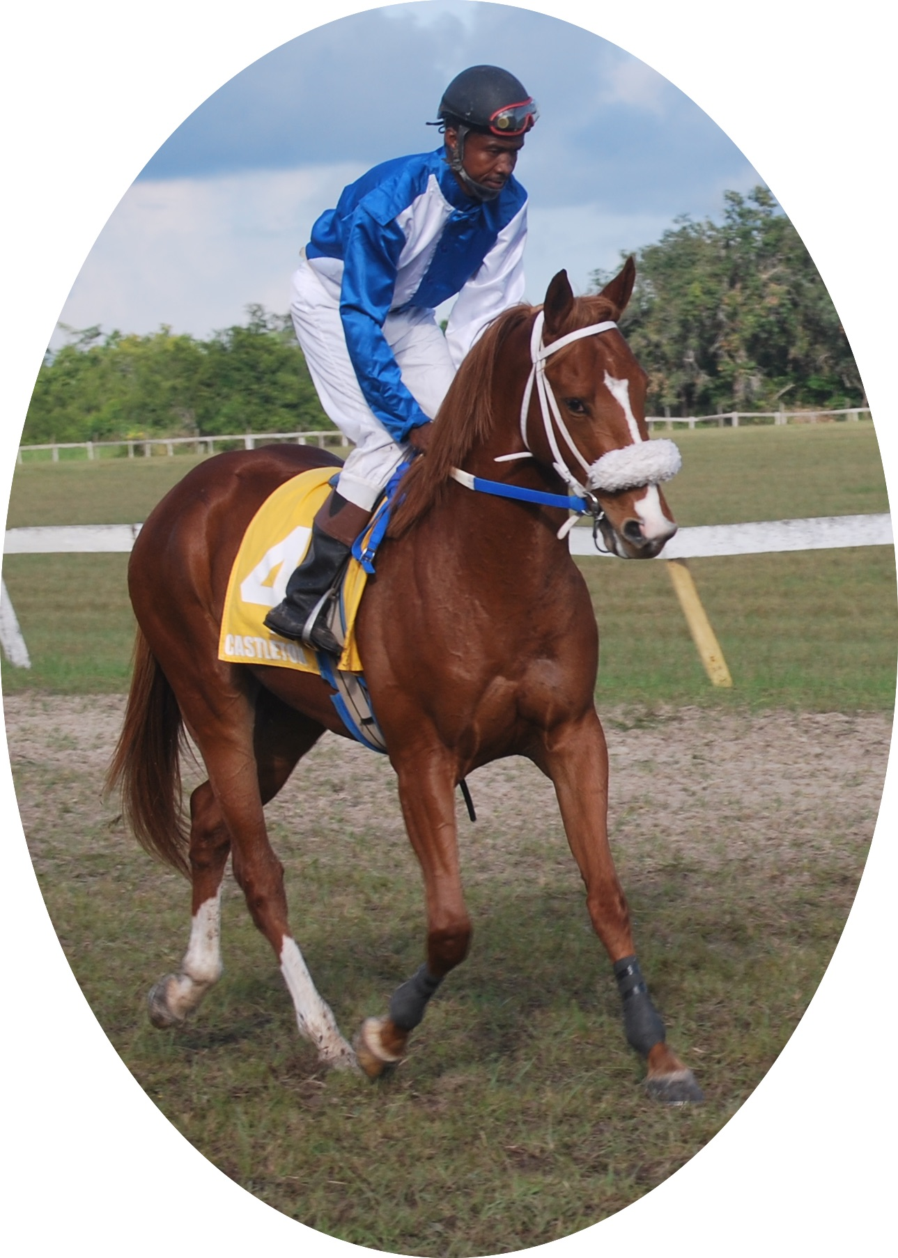 https://horseracingbelize.com/Champion