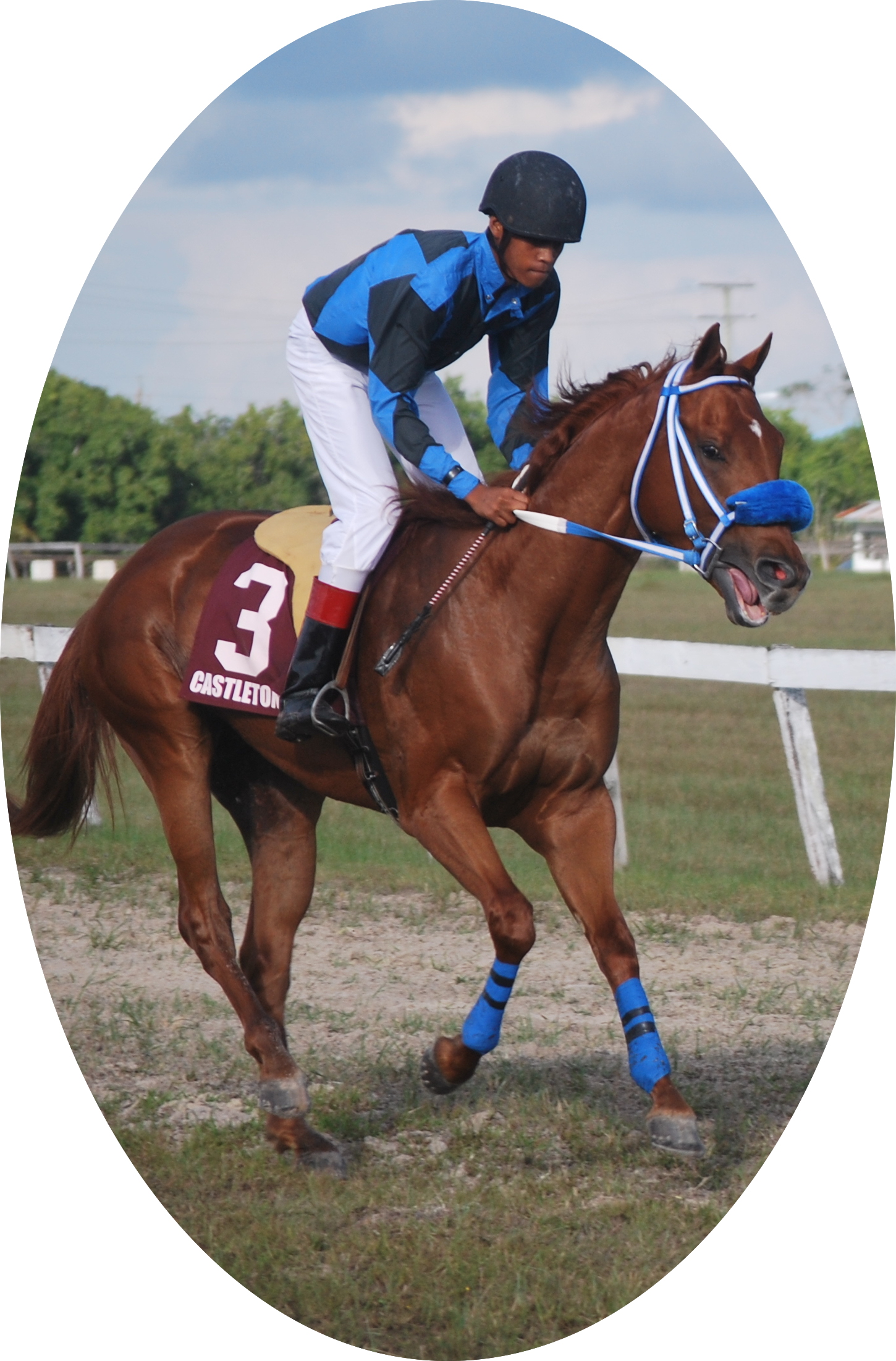 https://horseracingbelize.com/Junior