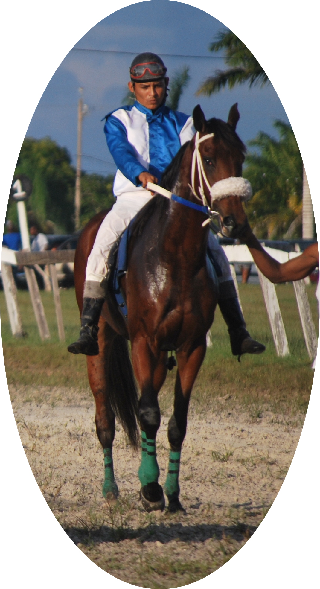 https://horseracingbelize.com/Sir Hilton