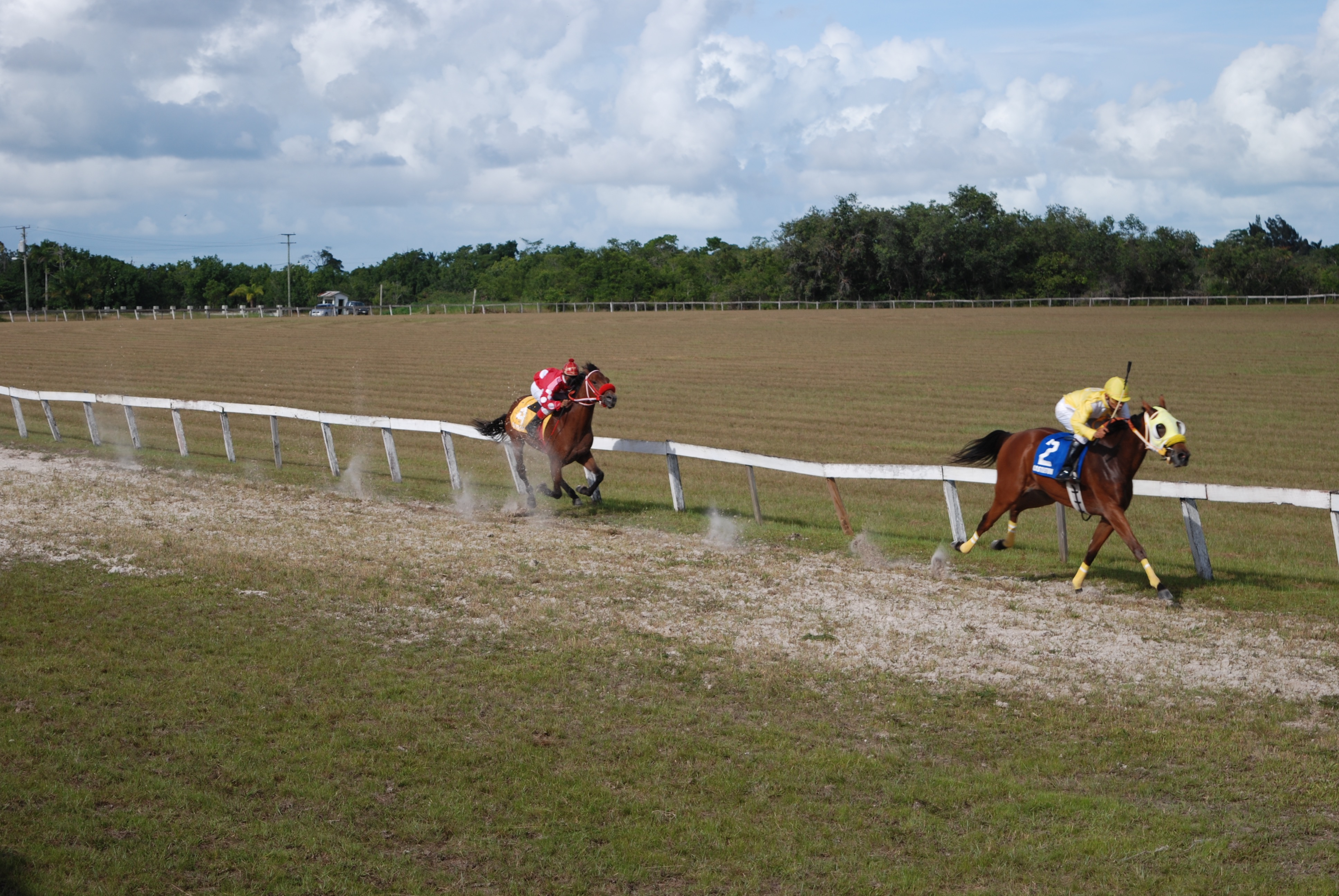 https://horseracingbelize.com/Perfect Gift of the Canton Stables powered home to win the Derby for Untried Two Year Old Thoroughbreds