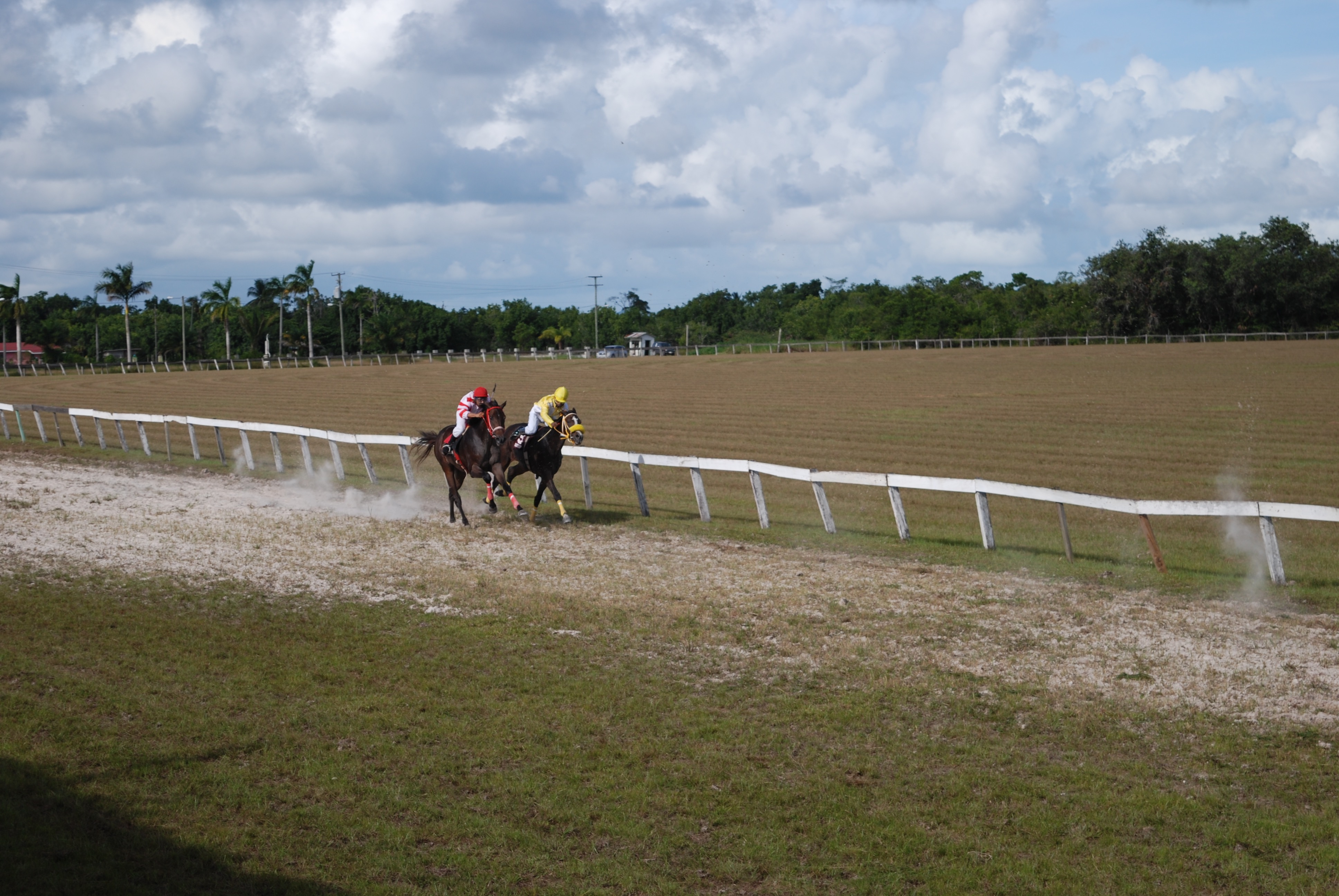 https://horseracingbelize.com/Duke and Wild Again finished third and fourth.