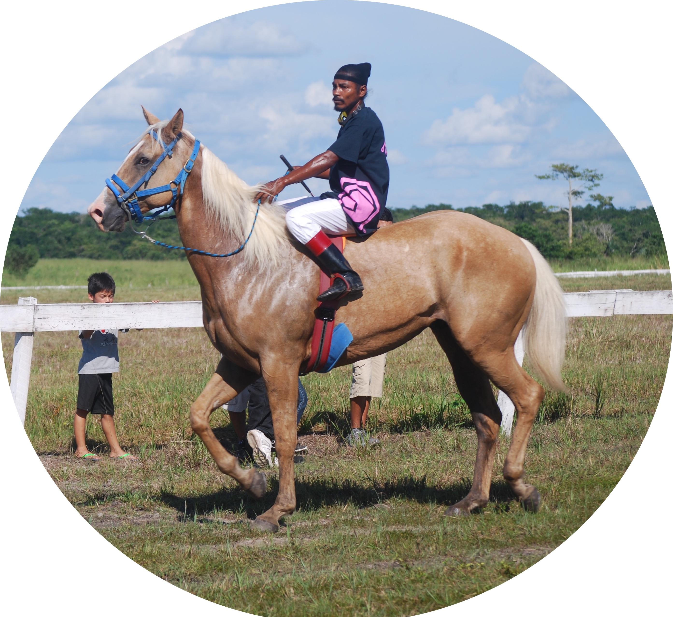 https://horseracingbelize.com/Jack