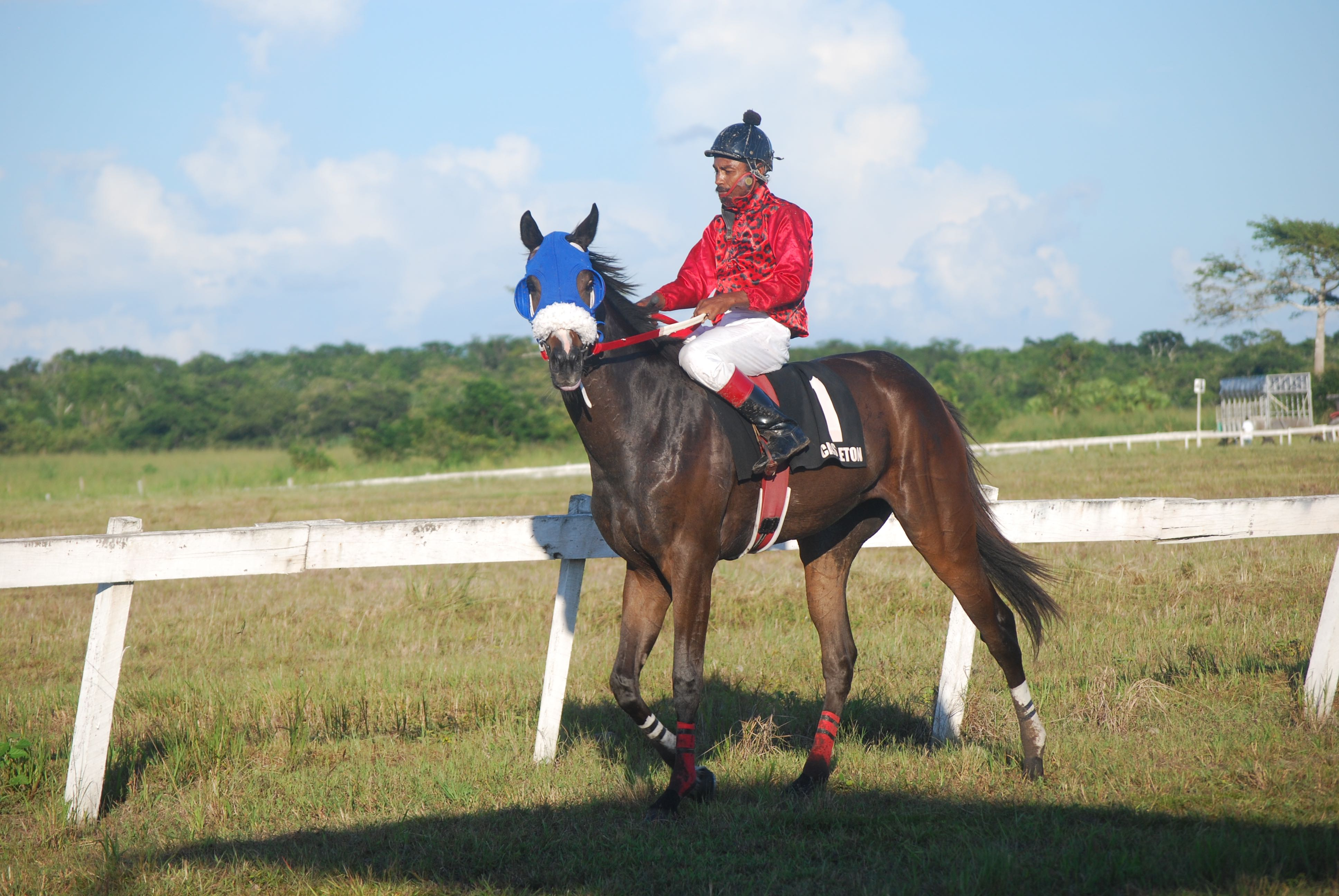 https://horseracingbelize.com/Wild Again