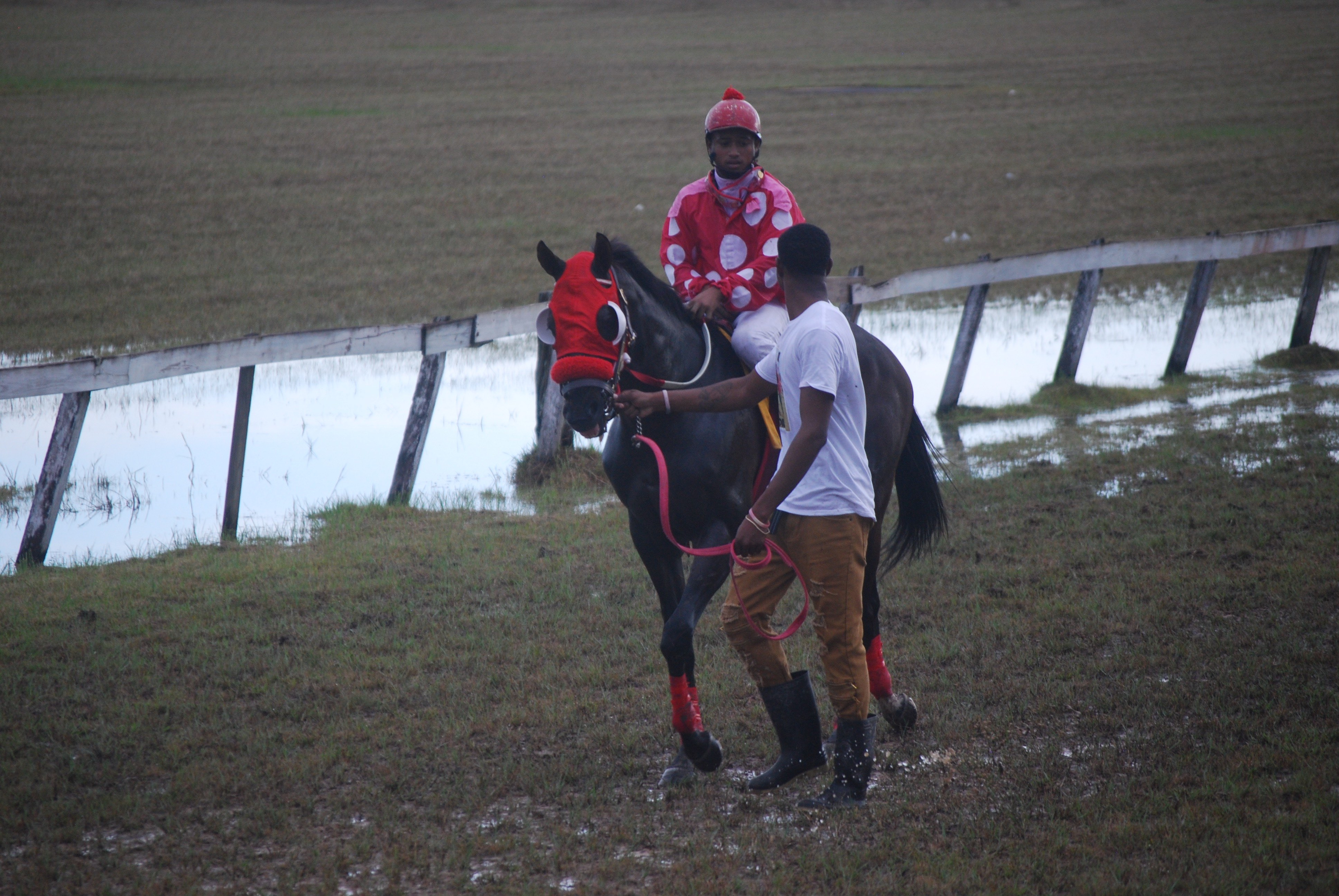https://horseracingbelize.com/Bad Kid