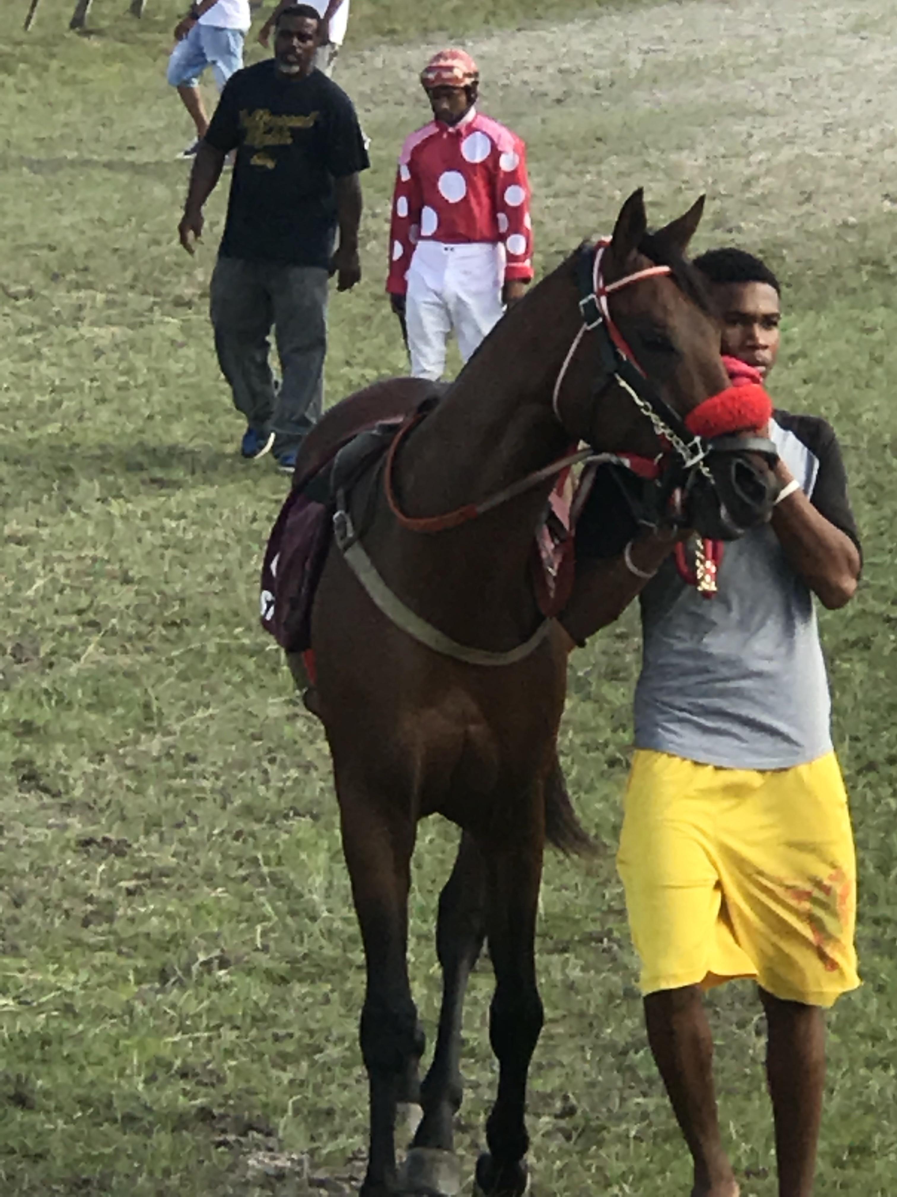 https://horseracingbelize.com/Pa Dan