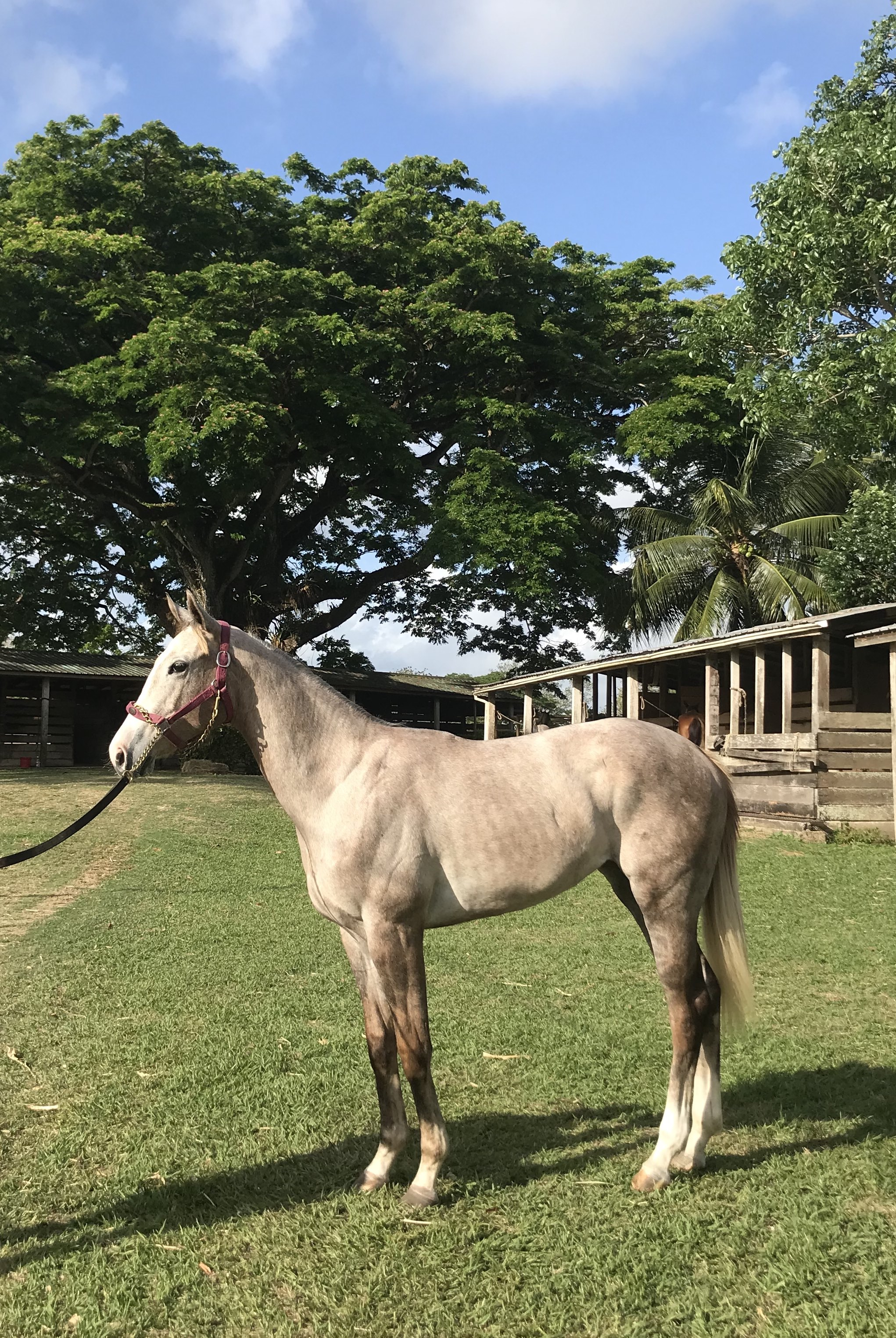 https://horseracingbelize.com/Unbridled Kiss