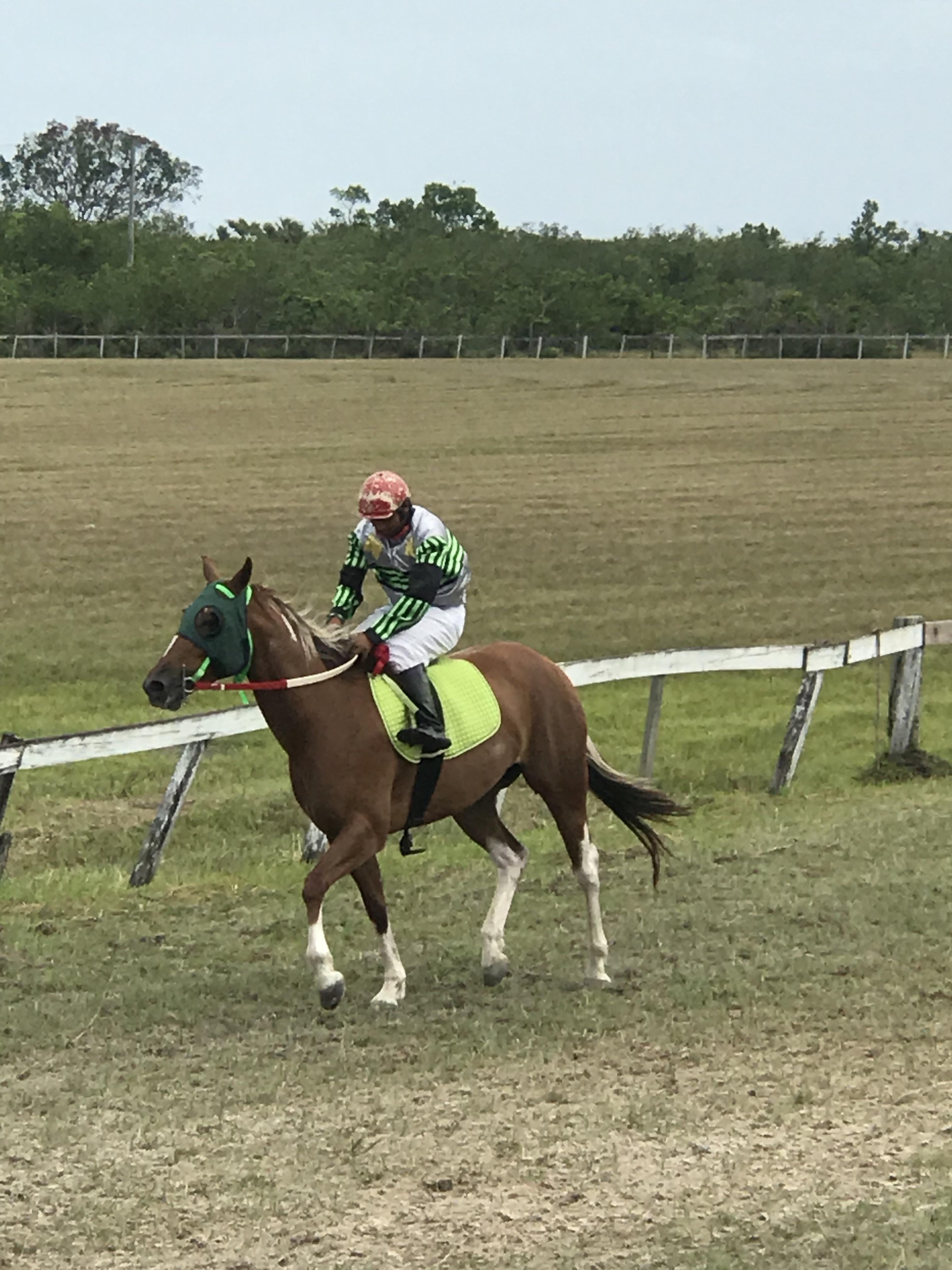 https://horseracingbelize.com/Luna Davina