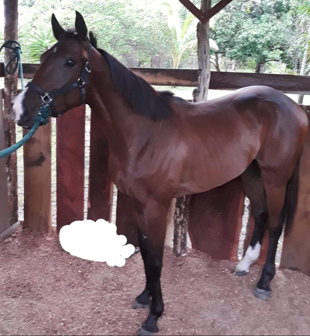 https://horseracingbelize.com/Royal Song