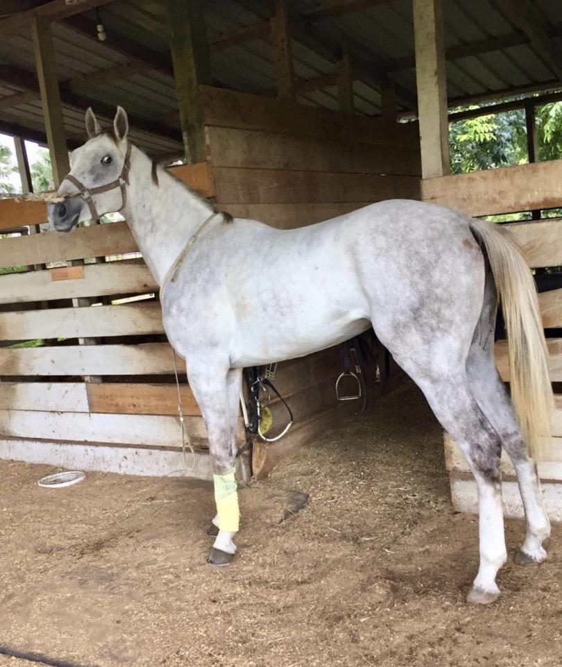 https://horseracingbelize.com/Fina's Girl
